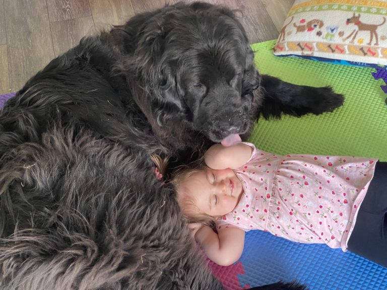 Read more about the article Abby the Newfie
