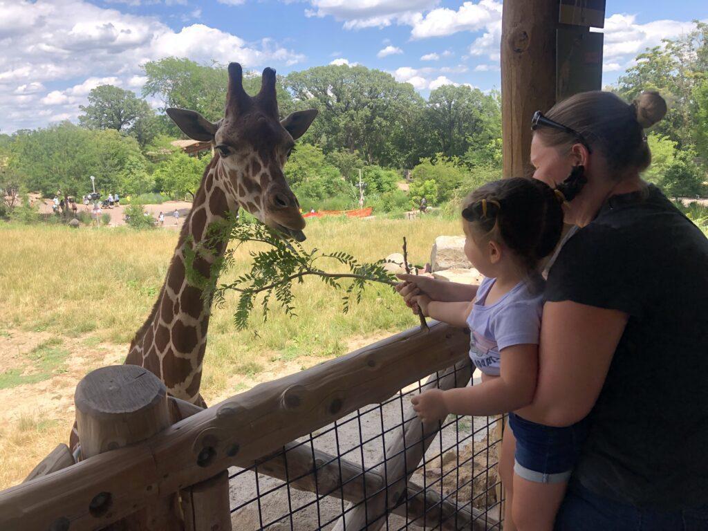 Feeding giraffes at the Omaha Zoo