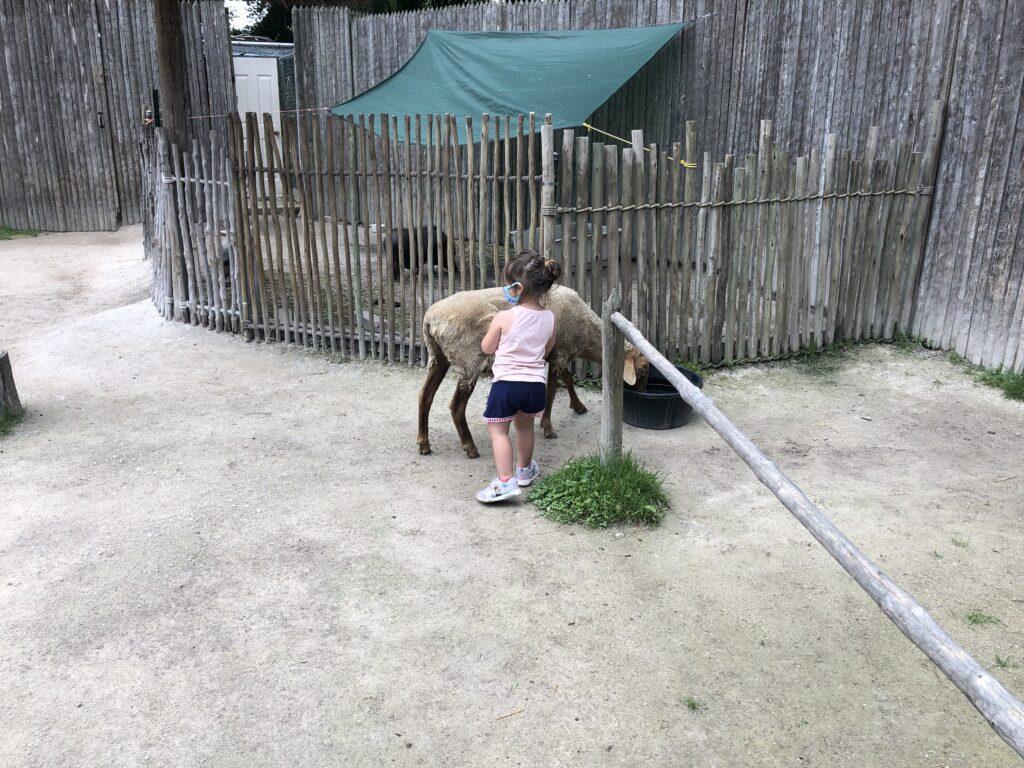 Racine Zoo Mack and sheep